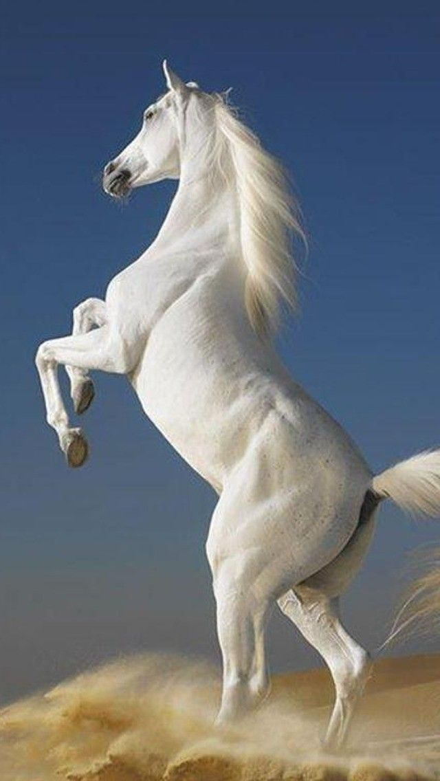 Horse Wallpaper Free Download 49 Pictures Beautiful Horses Horse Wallpaper Horses