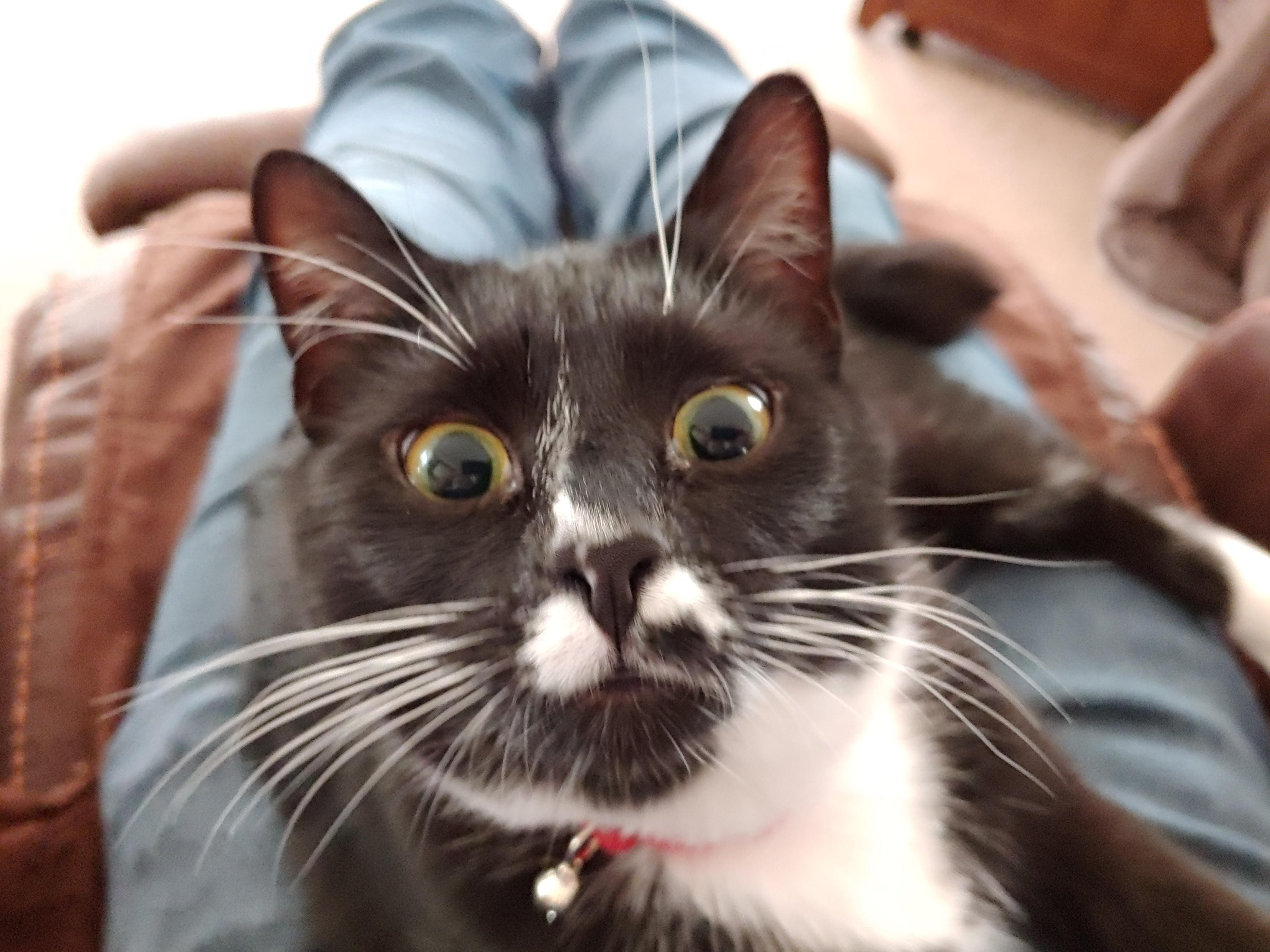 I just told her she was adopted. Startled cat, Funny cat