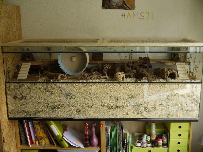 Terrarium Murphy S Buddelparadies Auf 160x50x60 Gehegevorstellung Www Das Hamsterforum De Con Immagini Criceti Habitat Terrario