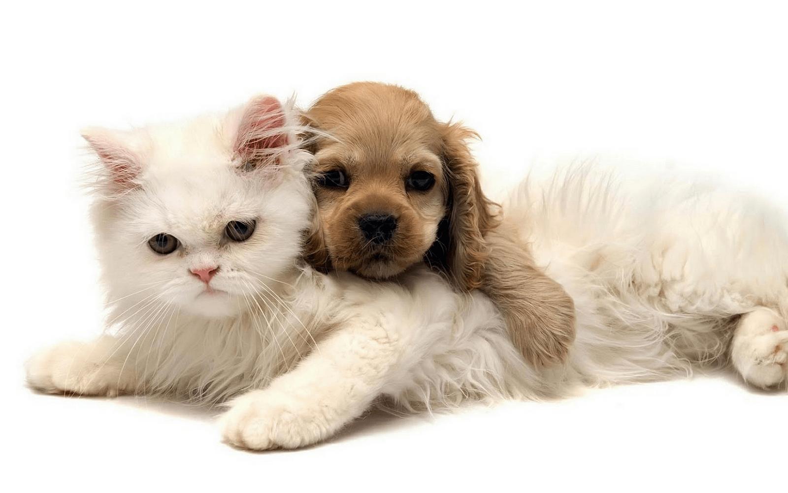 hund und katze als beste freunde  süße hunde und katzen