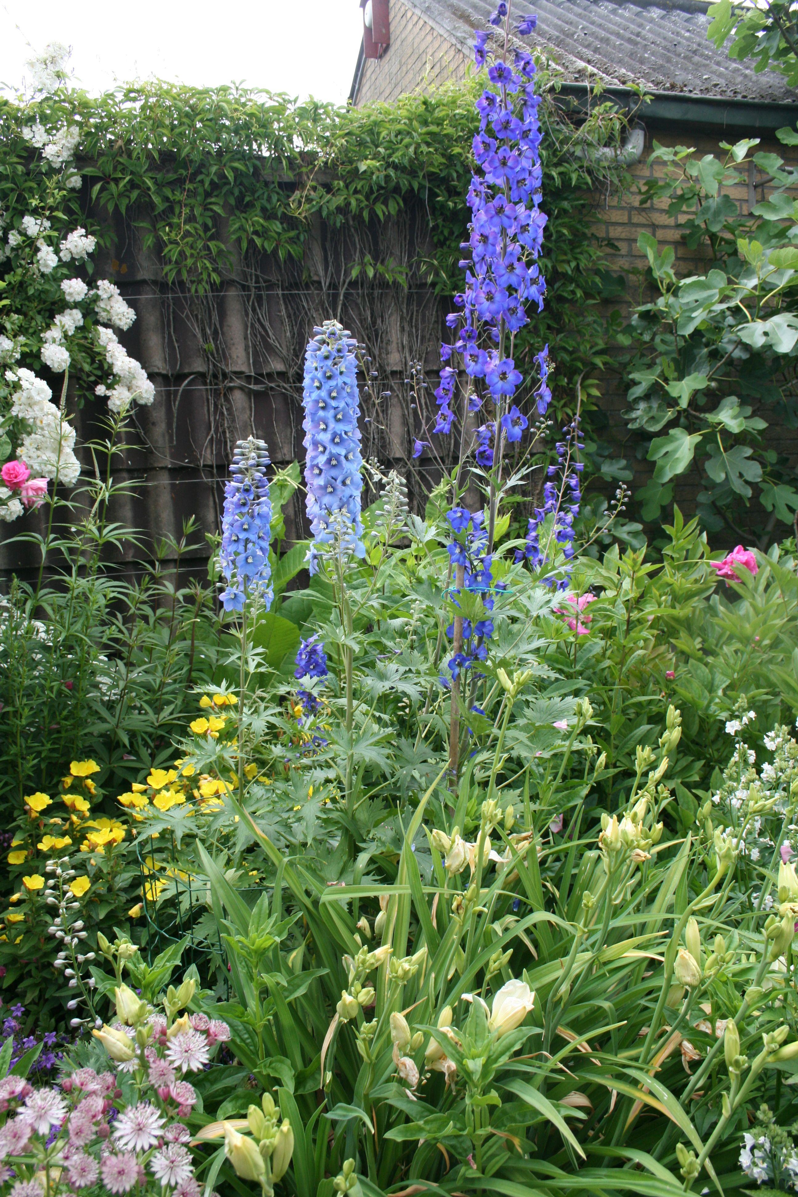 Inspirierend Blumenbeet Beispiele Schema