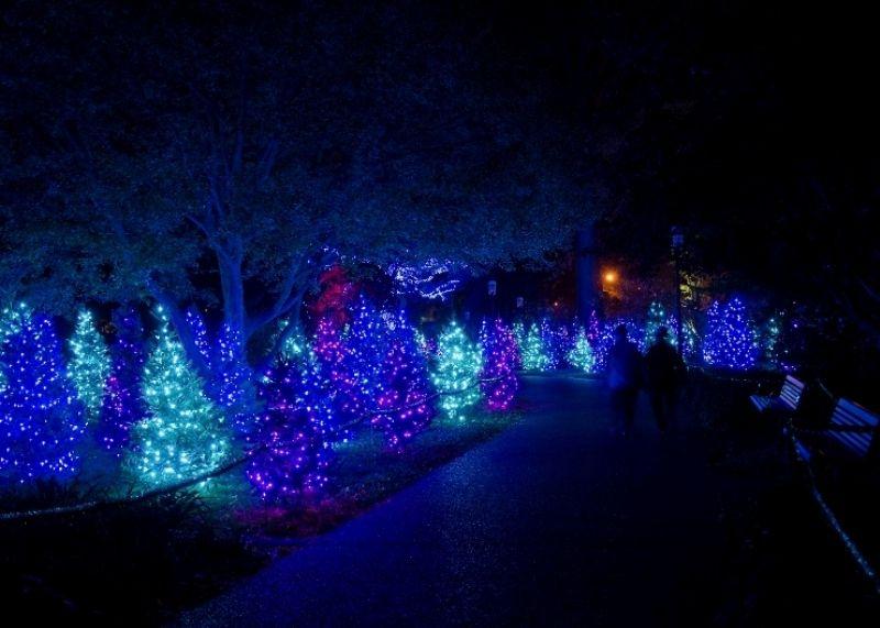aad0ab6afe09726bf8eb078994689e4b - Lights At Botanical Gardens St Louis