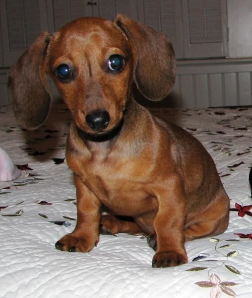 Ooooh this one is a cutie, no doubt about it! ) Hunde