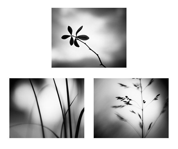 Black and white photo set three photographs 11x14 8x10 5x7 nature
