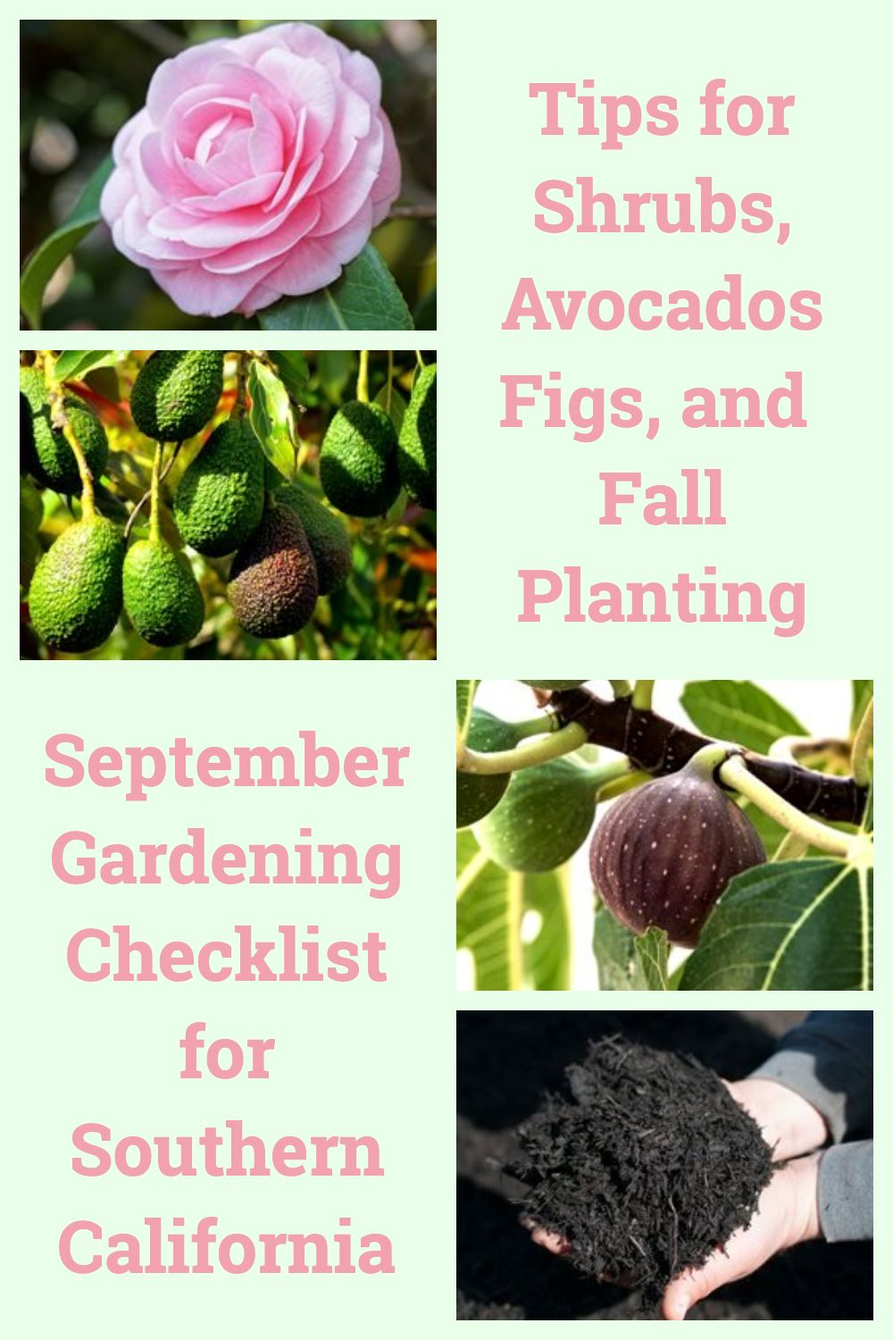 37++ What to plant in september in california ideas in 2021