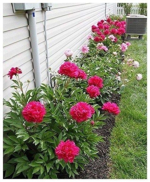 Gardening Ideas On A Budget: 39 Simple Front Yard Landscaping Ideas On A Budget
