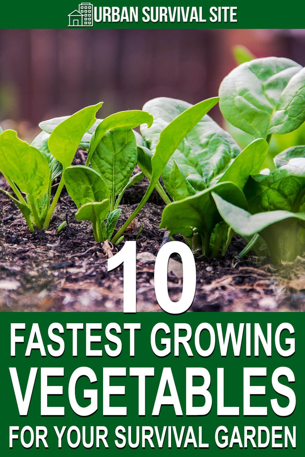 10 Fastest Growing Vegetables for Your Survival Garden is part of Growing vegetables, Survival gardening, Fast growing vegetables, Edible garden, Vegetable garden, Veggie garden - These vegetables can produce a harvest in as little as four weeks, and they give your family fresh greens to eat as you wait for the rest of your garden