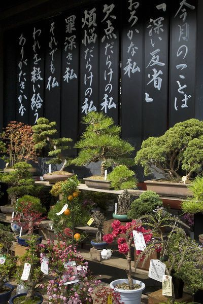 Greetings Card-Asia, Japan, Tokyo, display of bonsai trees for sale-Photo Greetings Card made in the USA#bonsai #card #cardasia #display #japan #salephoto #tokyo #trees #usa