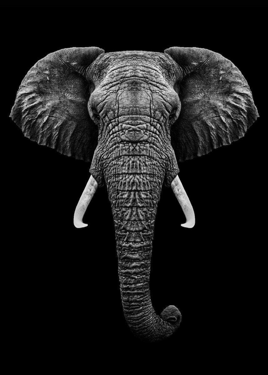 Elephant Wallpaper Black And White Google Search