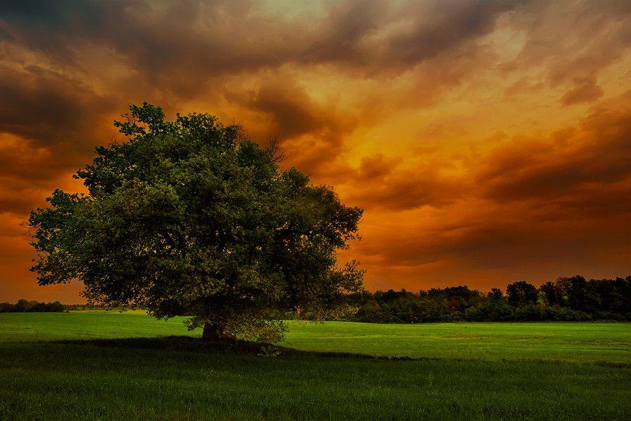 Sunset Tree by Alberto Romano on 500px