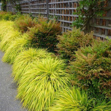 Landscape :: Credit: Monrovia #japanesegardendesign #JapaneseGardenTheme #sichtschutzpflanzen
