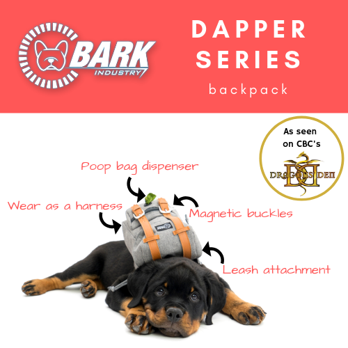 Pin On Backpacks For Dogs To Wear
