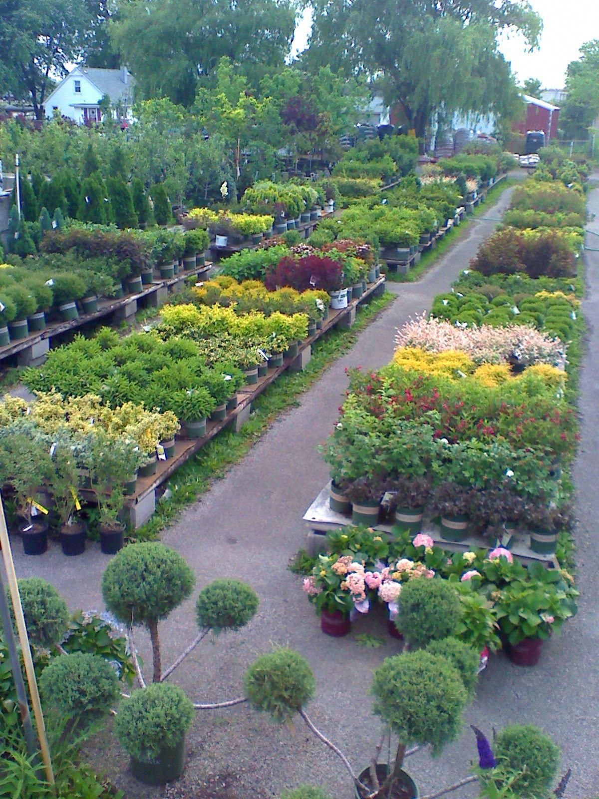 Clarke S Garden Center In Lynwood Il Family Owned And Operated