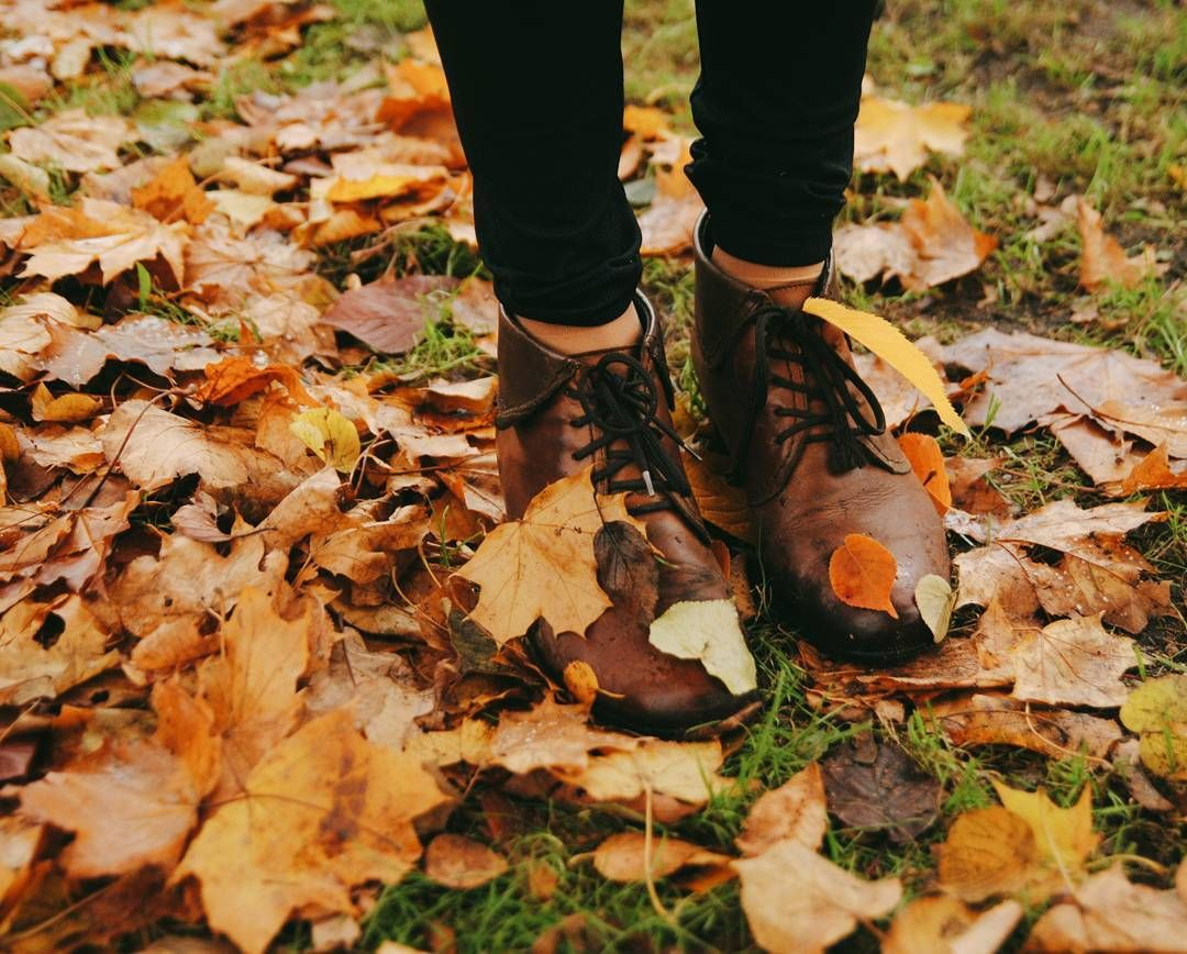 From the book where you might see the beautiful autumn leaves - Falling Golden Leaves