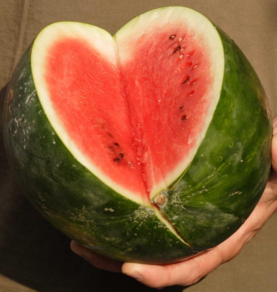 How To Grow Melons With Images Companion Planting 400 x 300