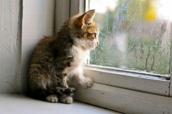 Kitten Staring Out At The Rain Crazy Cats Animals Cats