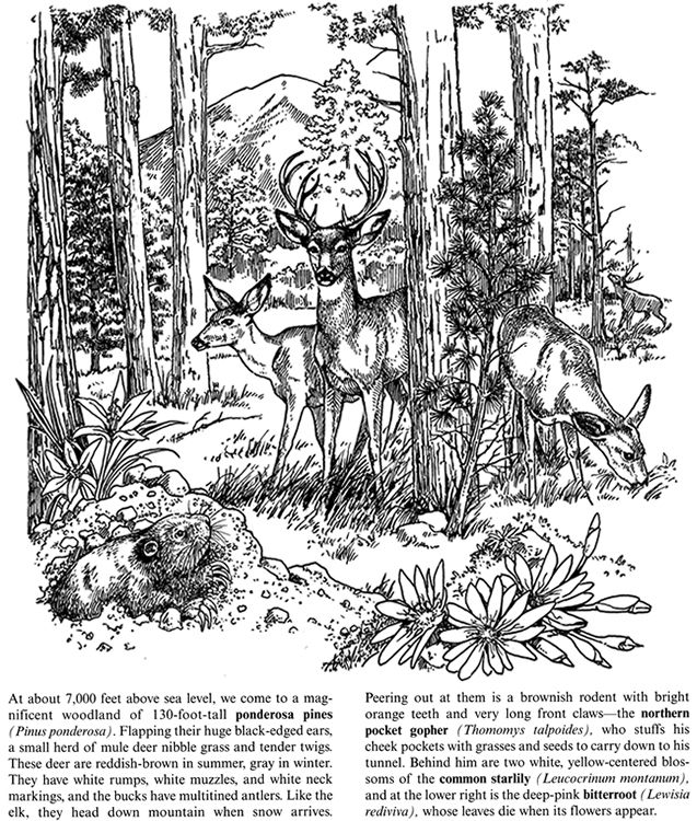 Rocky Mountains Plants And Animals Coloring Book 2 Sample Pages Coloring Pages Animal Coloring Books Forest Color