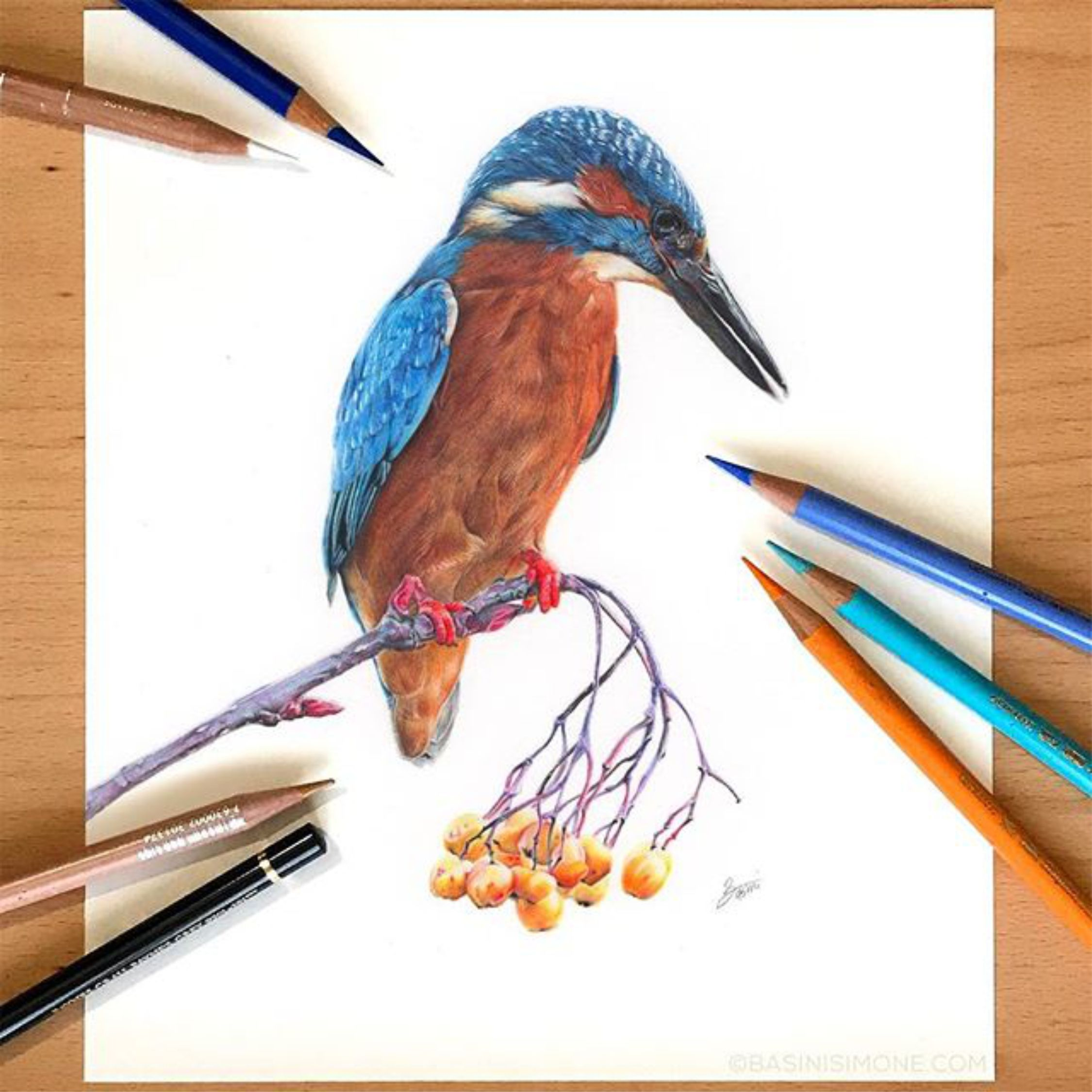 Pin by lenka angelava 4eva on birds in 2020 kingfisher