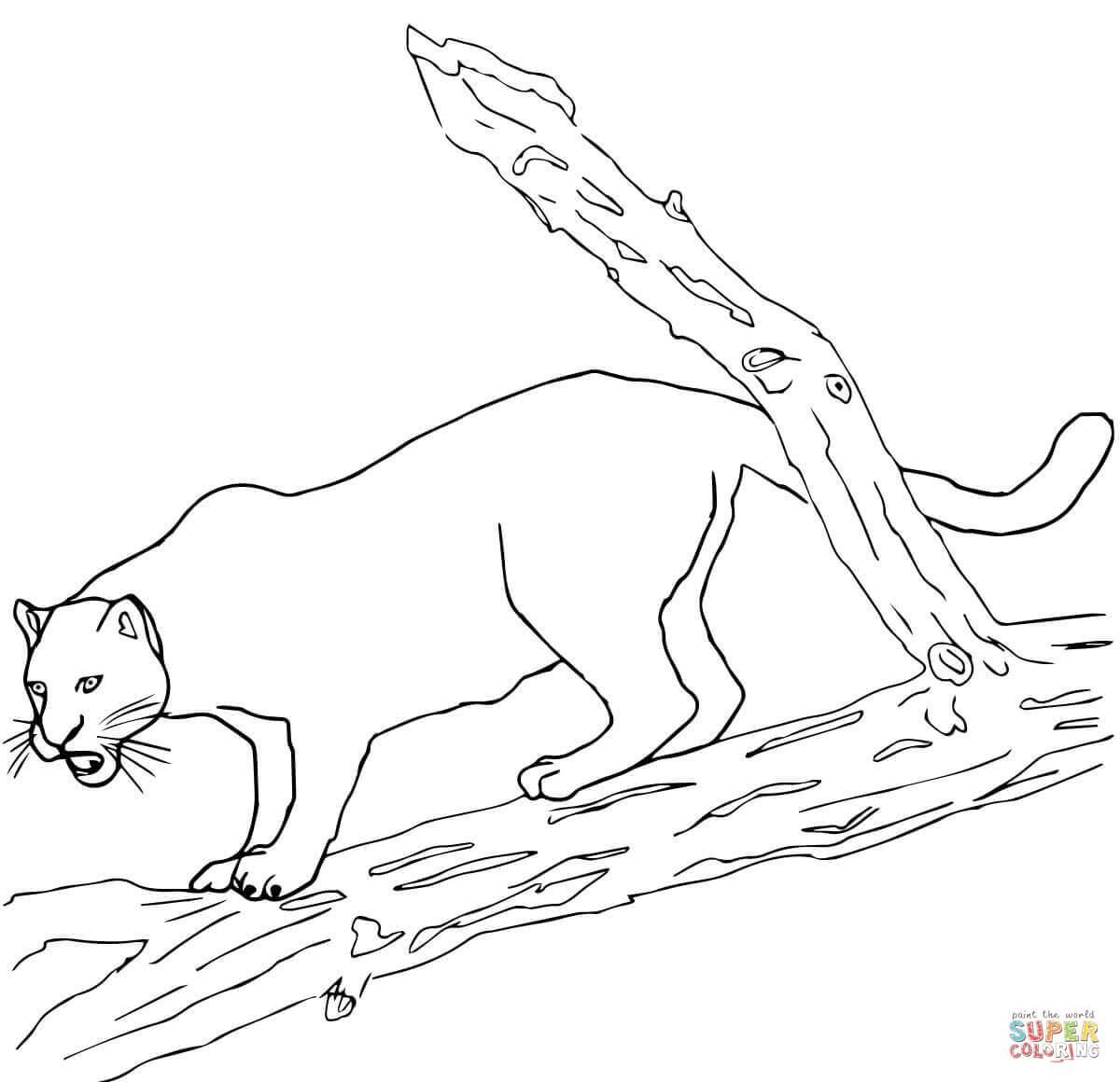 Fine Coloring Page Jaguar that you must know, You're in