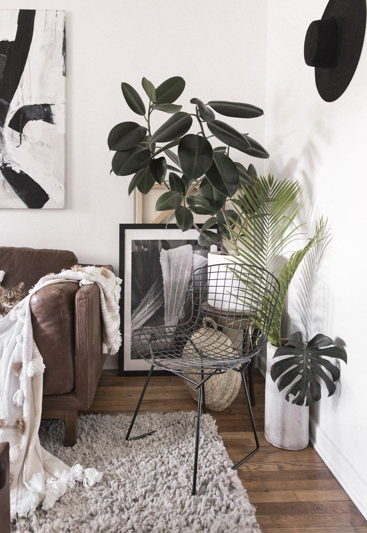 one couple turned a 650 square foot rental into a plant filled