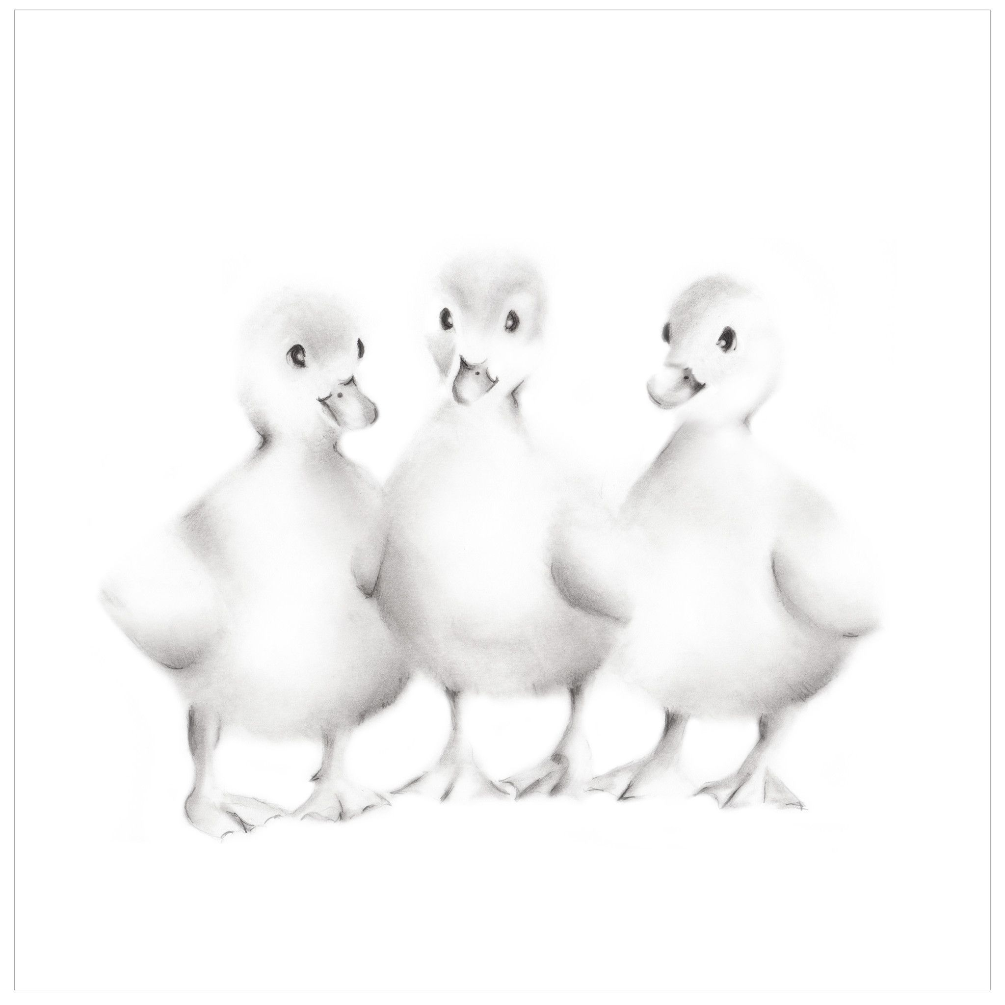 Baby Duckling Pencil Drawing Print