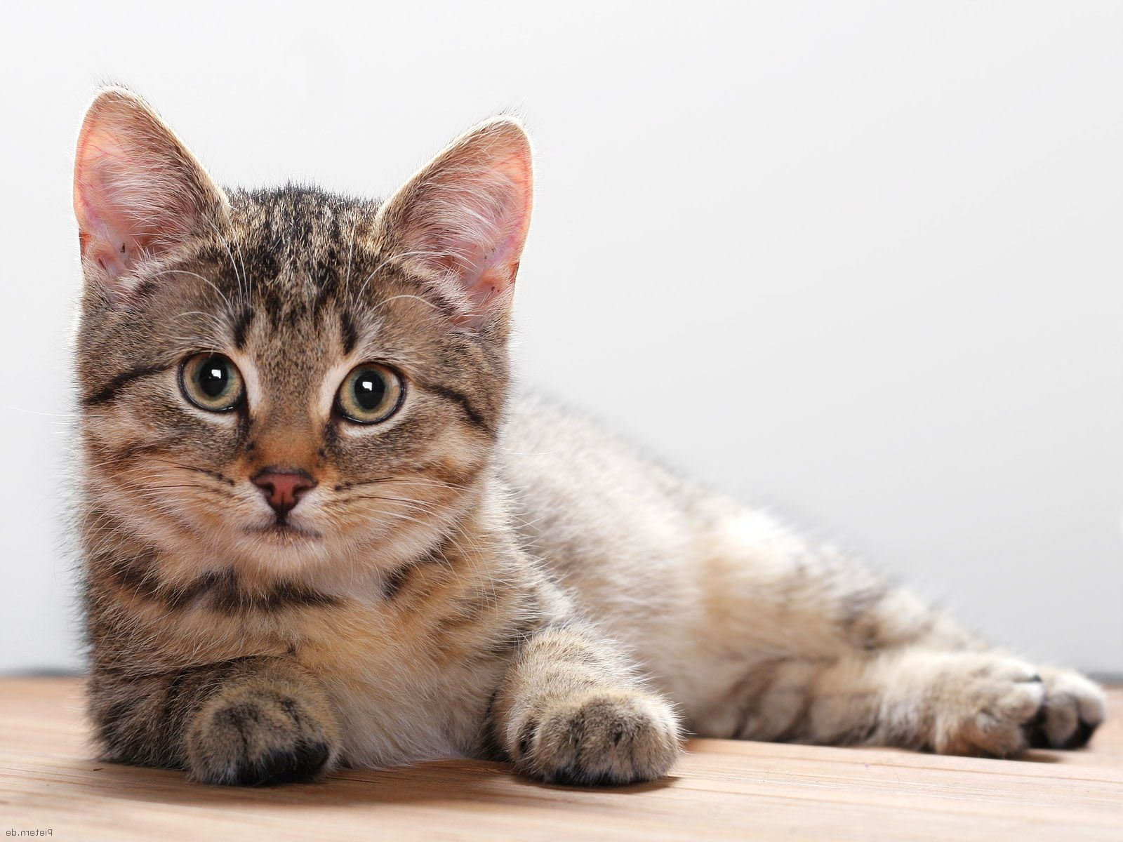 FDA Warns Topical Painkiller is Toxic to Cats