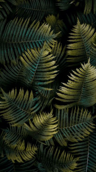 The latest iPhone11, iPhone11 Pro, iPhone 11 Pro Max mobile phone HD wallpapers free download, fern, leaf, macro, green - Free Wallpaper | Download Free Wallpapers