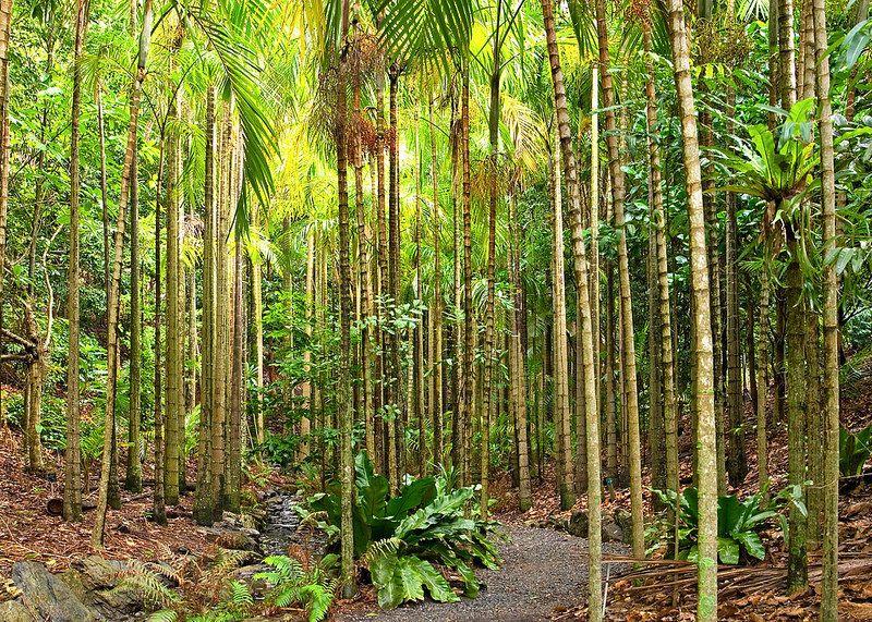 Point of interest 8 - Palm Grove | Australian native ...