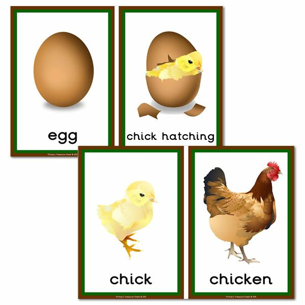 It's just an image of Life Cycle of a Chicken Printable with worksheet