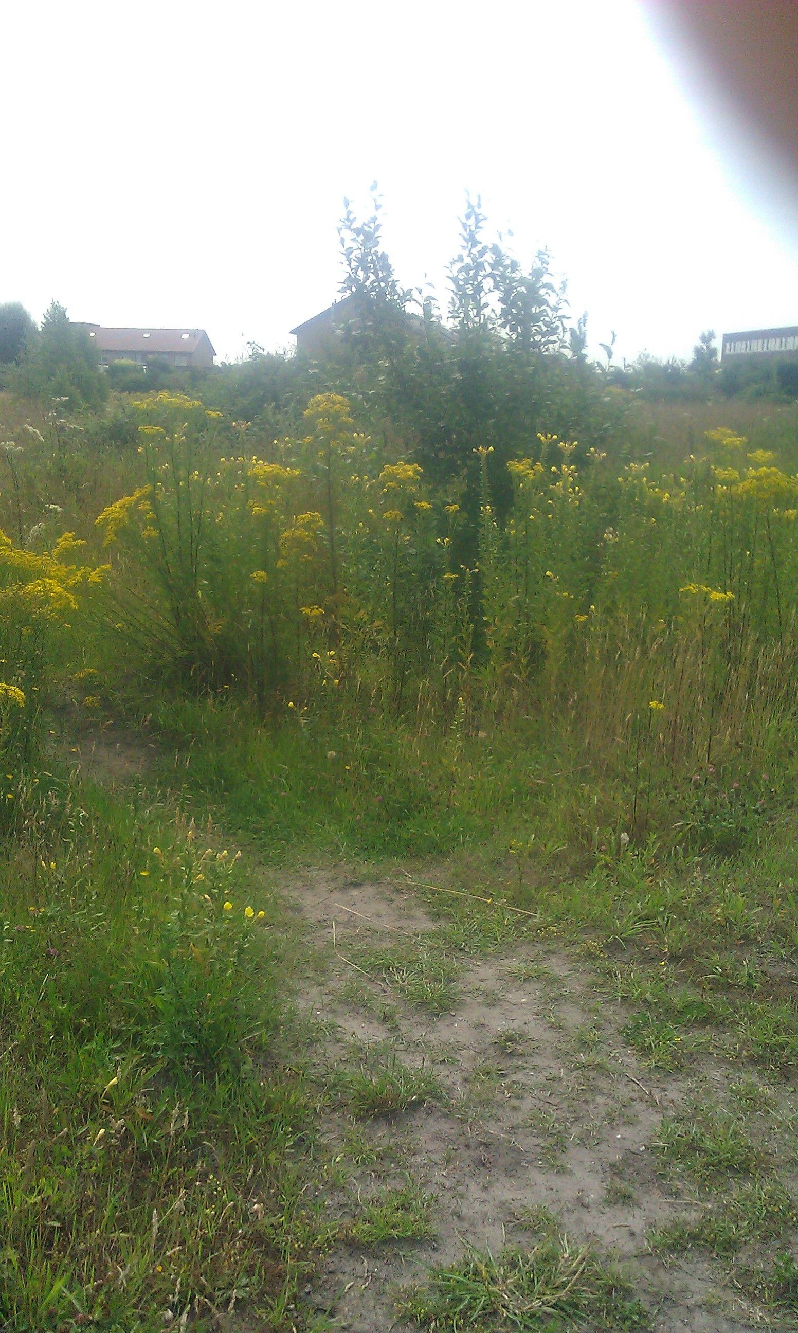 Kloosterveld, natuurspeelplaats