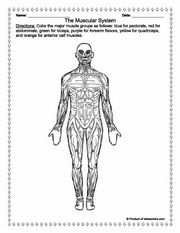 This site has some nice anatomy worksheets that would be