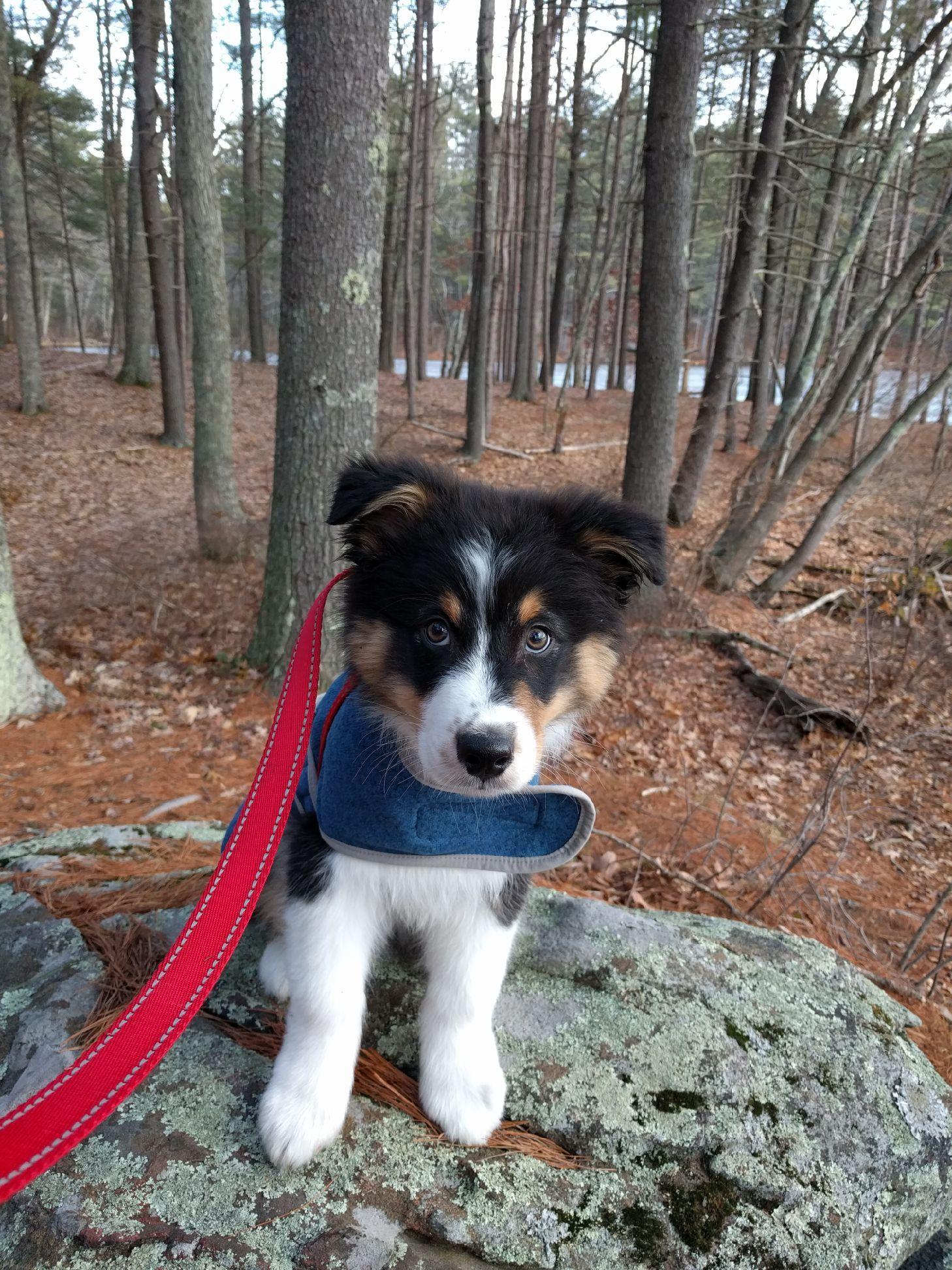 A little jacket for the little pup   http://ift.tt/2iMG3NN via /r/dogpictures http://ift.tt/2iMuFlc  #lovabledogsaroundtheworld