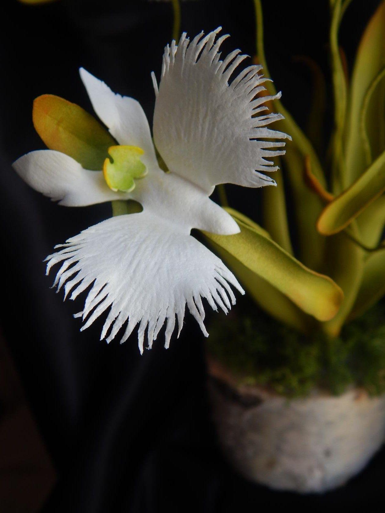 орхидея белая цапля фото птичниках для