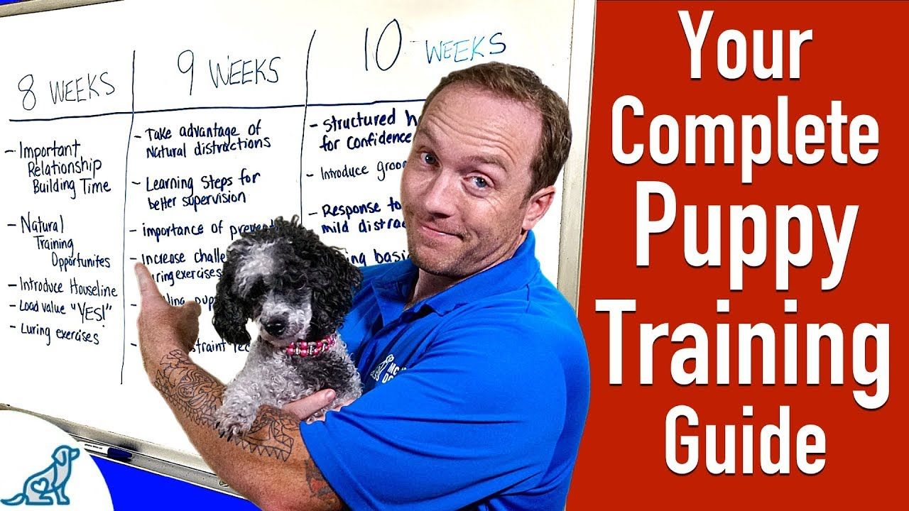 Puppy Development Growth Stages Guide Key Age Milestones And