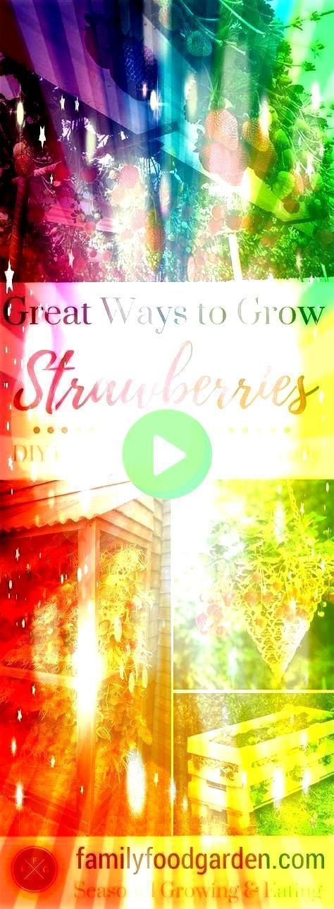 #strawberriesmoremorebest #strawberriesmoremore #gardeningtips #strawberries #containers #strawberry #manyways #planters #potsbest #growing #ground #pests #ideas #great #growto Grow Strawberries in Containers - Planters - Ideas of Planters -  So many ways to grow strawberries! Growing strawberries in containers strawberry planters & strawberry pots is a great way to keep the strawberries off the ground & away from pests. Grow strawberriesMoreMoreBest Ways to Grow Strawberries in Containers - Plt #growingstrawberriesincontainers