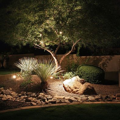 Olive tree with under planting night garden pinterest for What to plant under olive trees