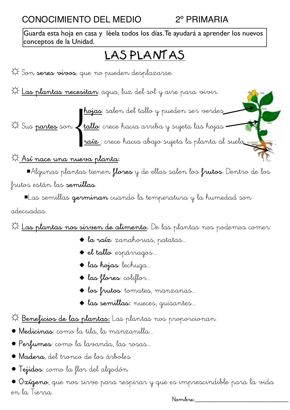 Las plantas aprendizaje pinterest las plantas - Fichas de plantas para ninos ...