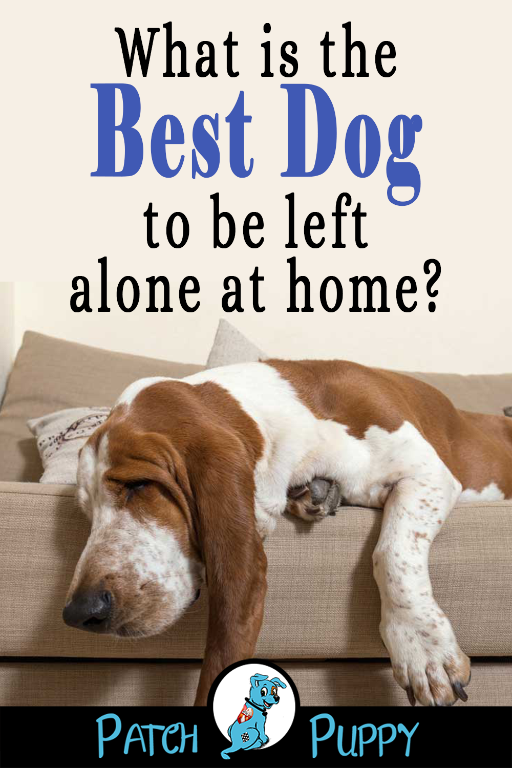 12 Dog Breeds That Can Stay Home Alone Patchpuppy Com Dog Breeds Dogs Scary Dogs