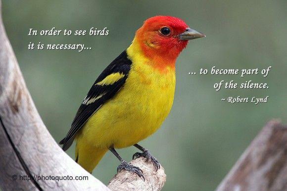 Robert Lynd Sweet Little Bird Bird Quotes Birds Quotes