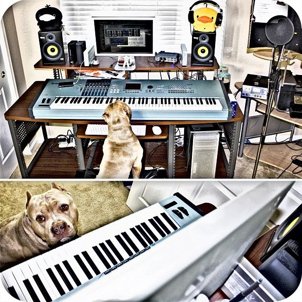 dog trying to compose a song #pitbull #dogs