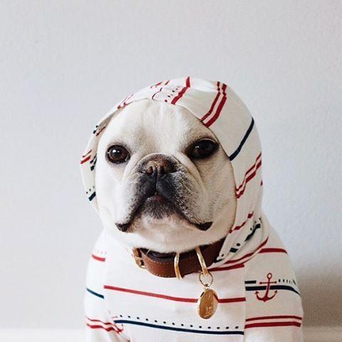 Theo The French Bulldog Theobonaparte On Instagram I 3