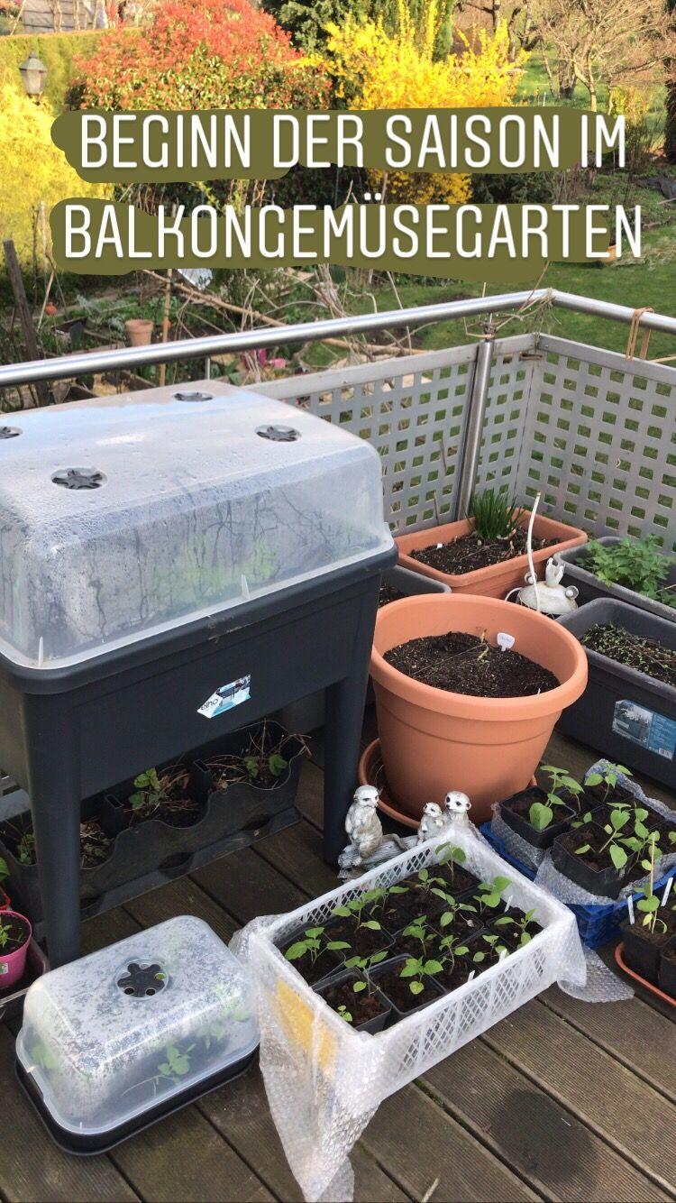 Bakongarten Balkon Balkon Gemuse Garten In Baden Baden In 2020 Terrasse Bepflanzen Miniaturgarten Gemuse Anbauen