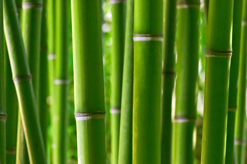 Zen bamboo Wall Mural