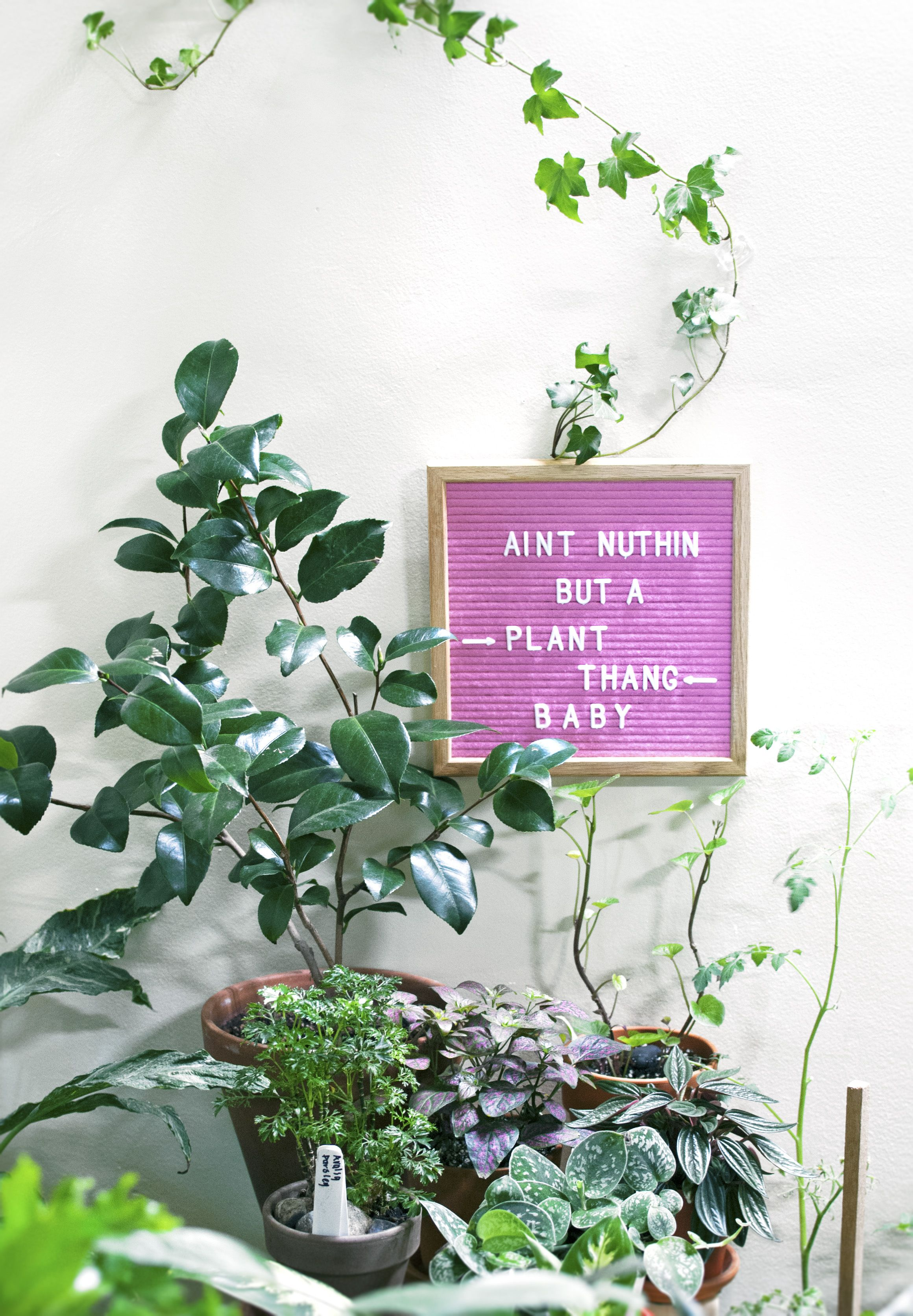 My Letterboards Sept. 2018 Plants, Indoor plants, Plant