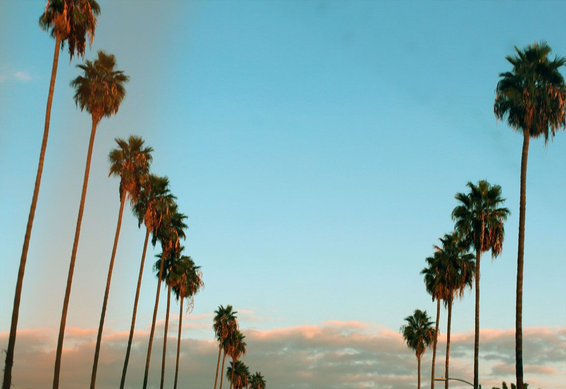 Palm trees tumblr computer background