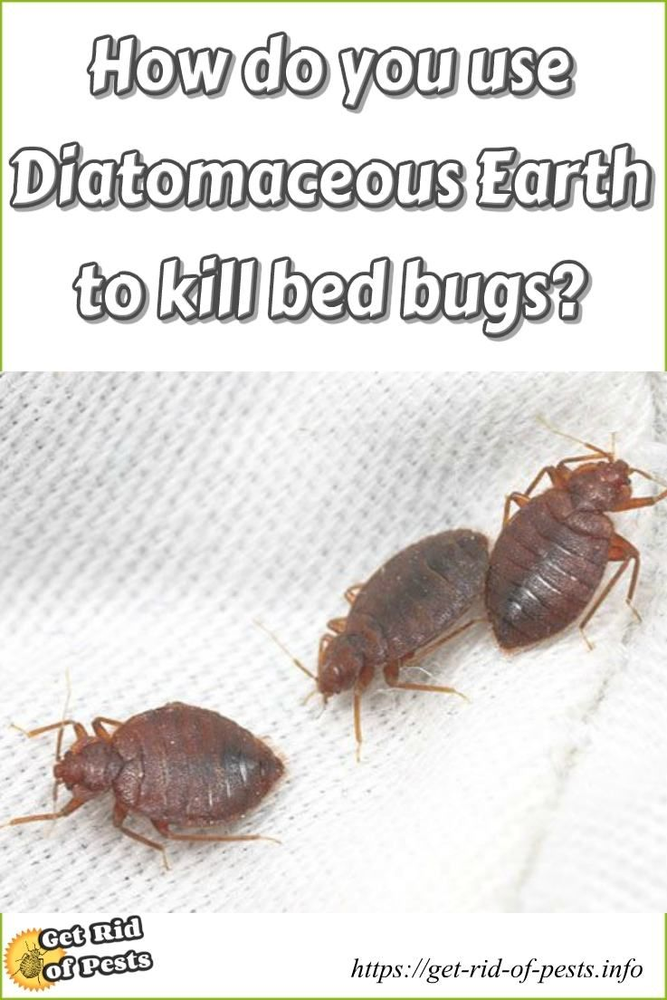 How Do You Use Diatomaceous Earth To Kill Bed Bugs Step By Step