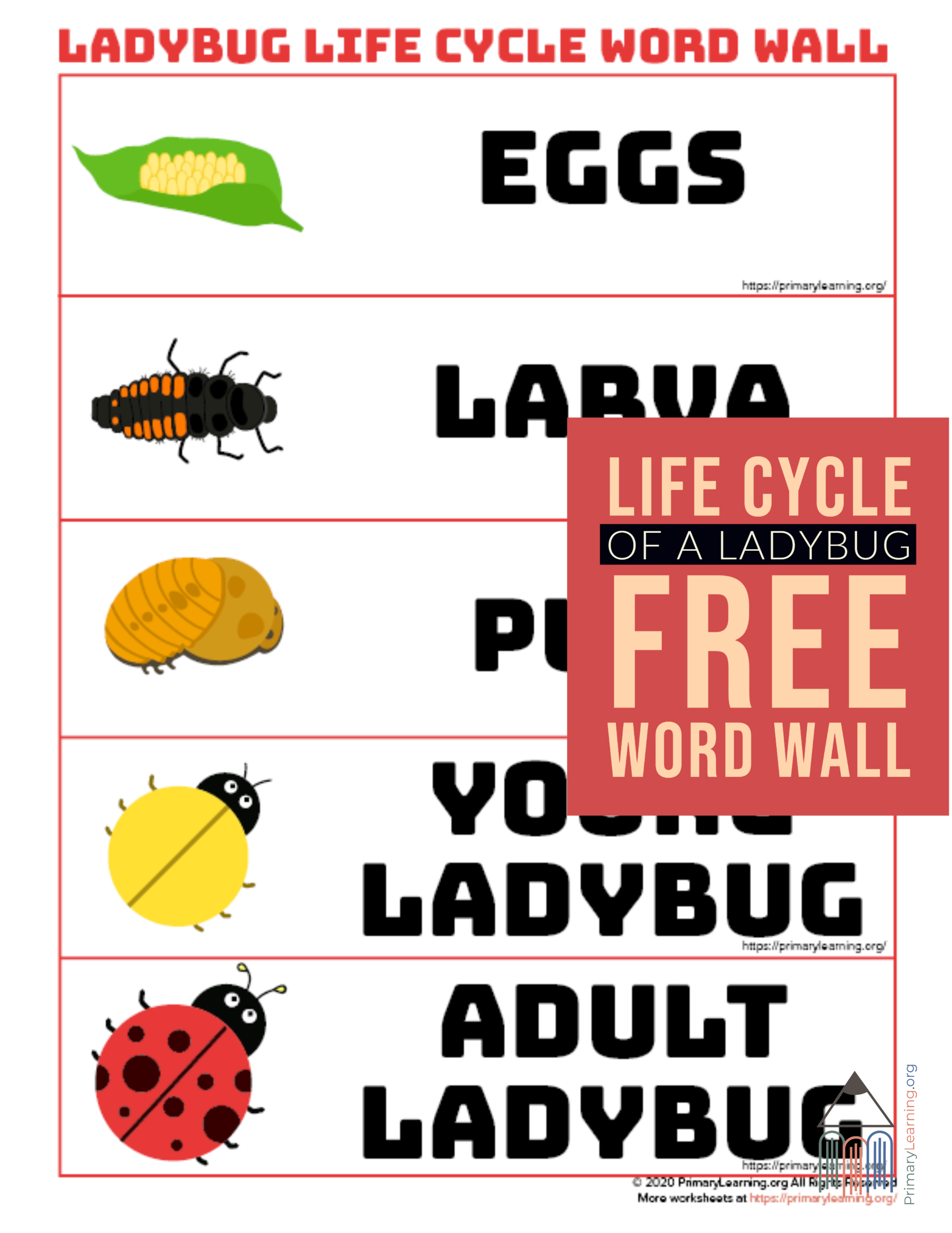Ladybug Life Cycle Word Wall