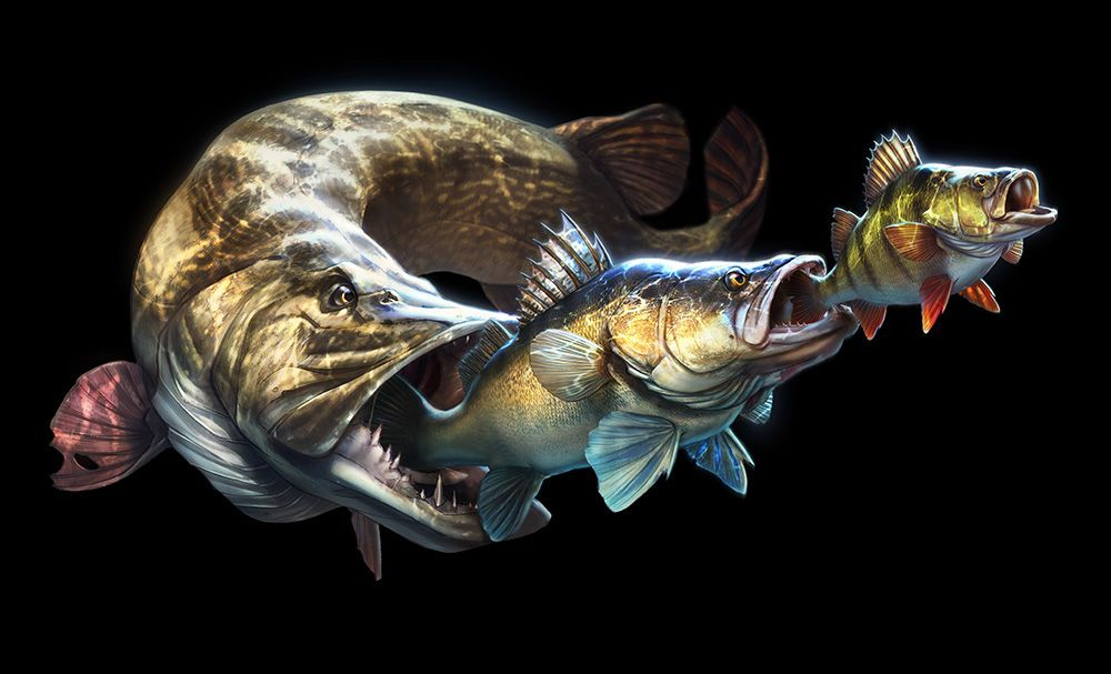 Pike/Zander/Brass - Tommy Kinnerup | Fisch bilder, Fisch ...