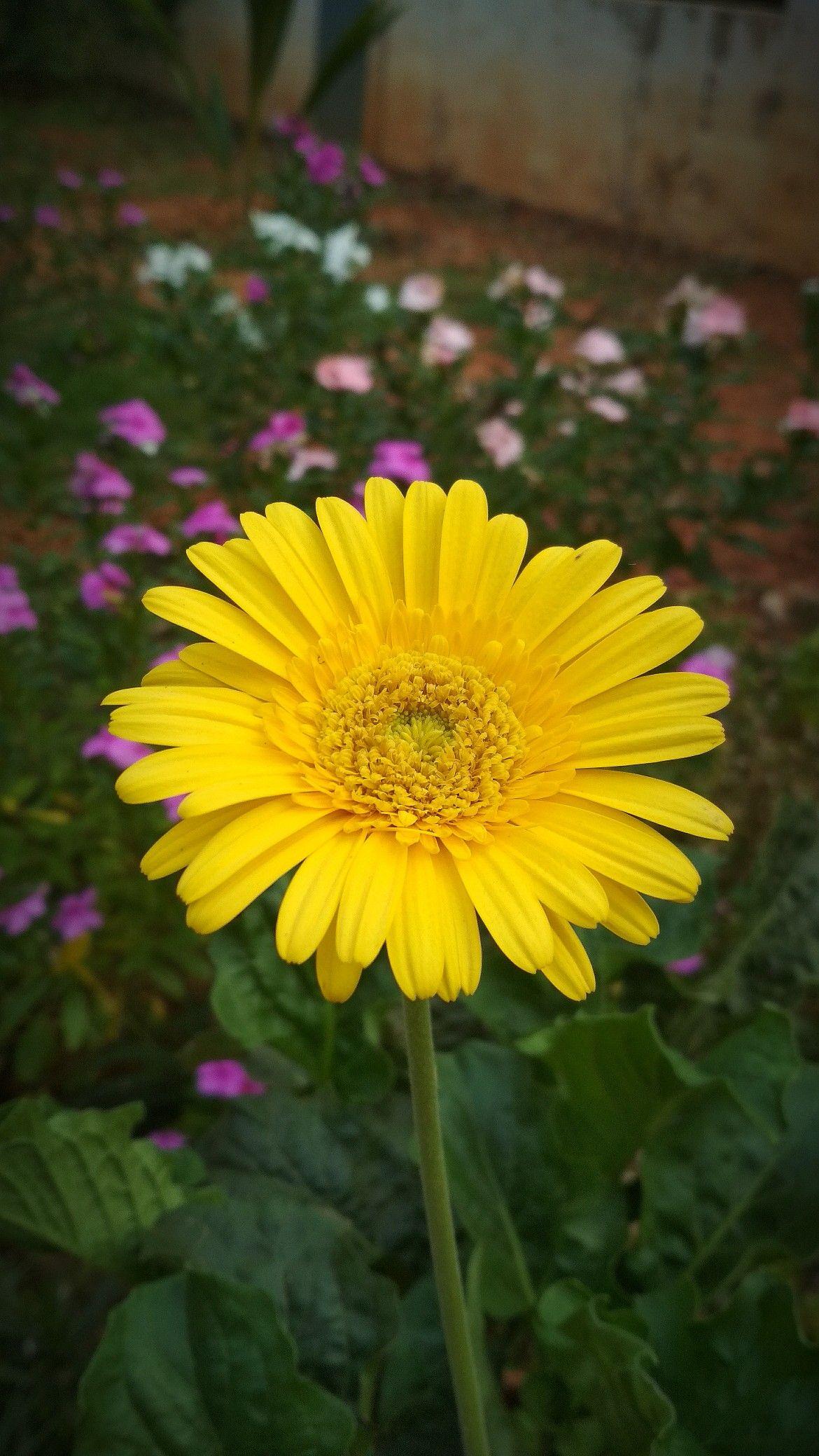 flowers kerala Plants, Garden