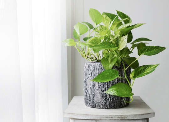 10 Houseplants To Improve Indoor Air Quality Small